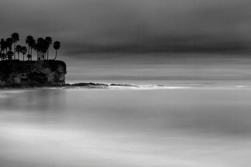 Pacifico 20 Palms